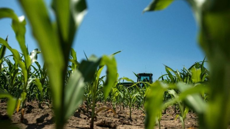Mexico Threatens to End US Corn Imports
