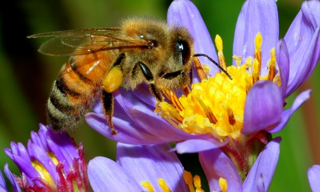 Could the disappearance of Honey Bee's be prophetic? wow